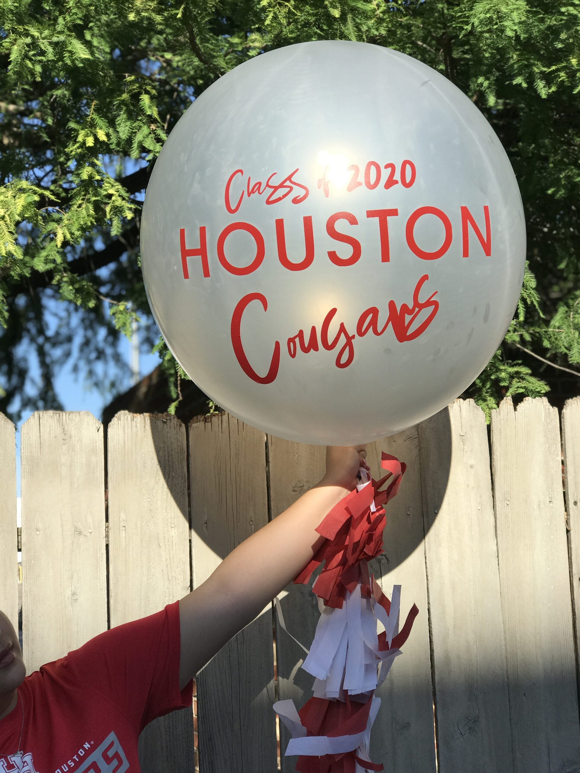 Where to find cougars in houston